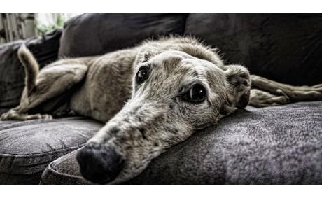 Выбираем диван для дома со всей ответственностью